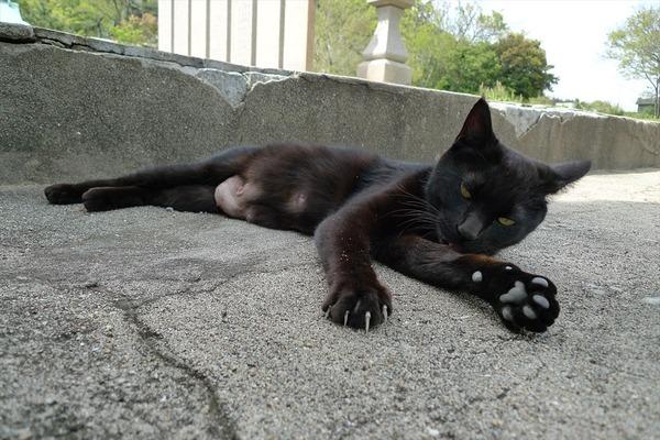 佐柳島、猫 (59)