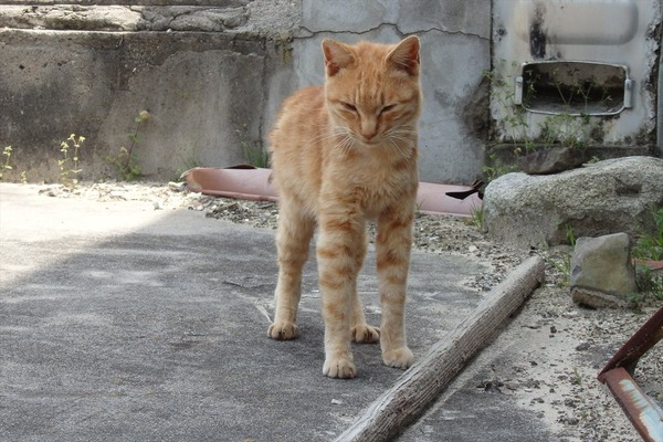 佐柳島、猫 (61)