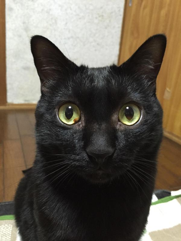 猫 (71)