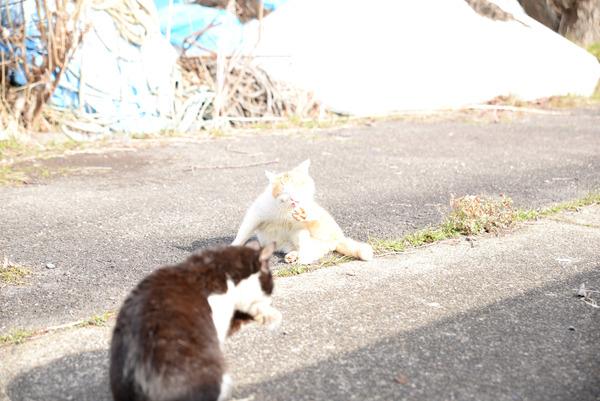猫 (16)