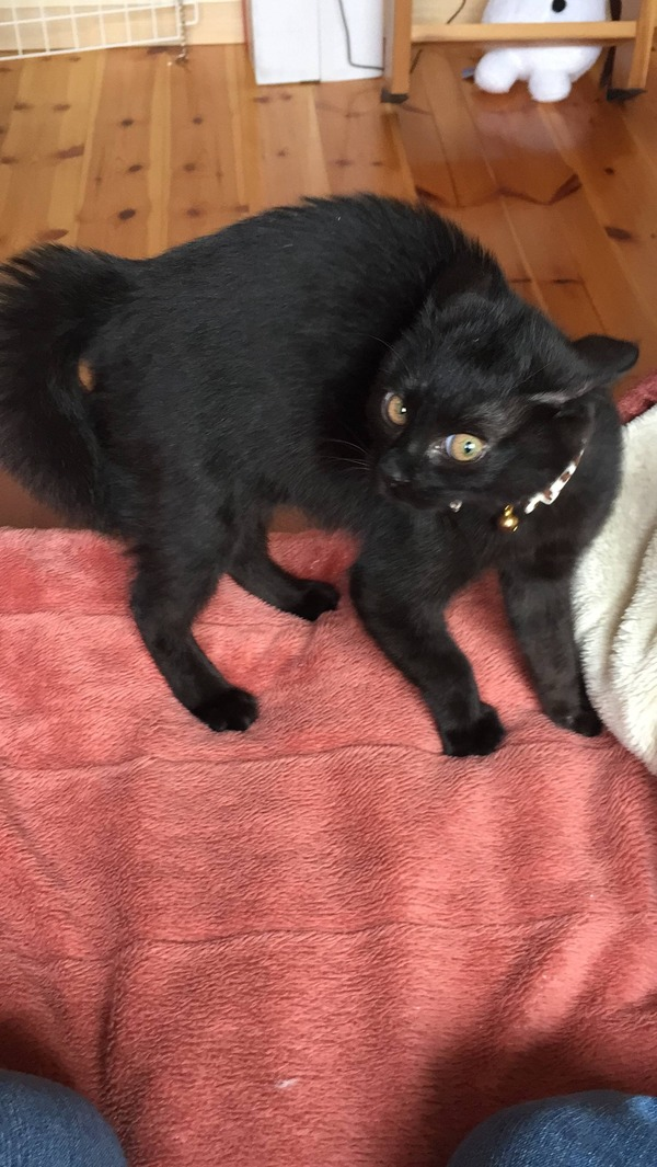 猫 (23)
