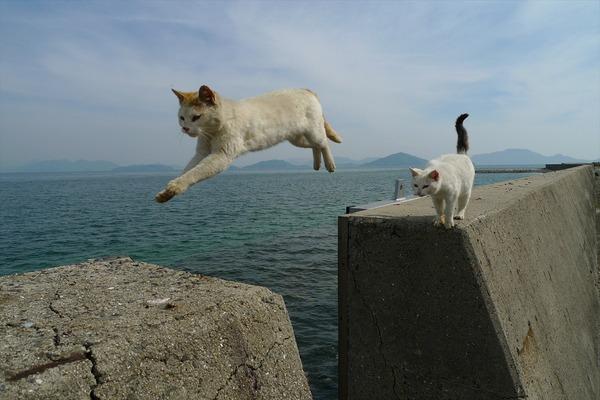 佐柳島、猫 (14)