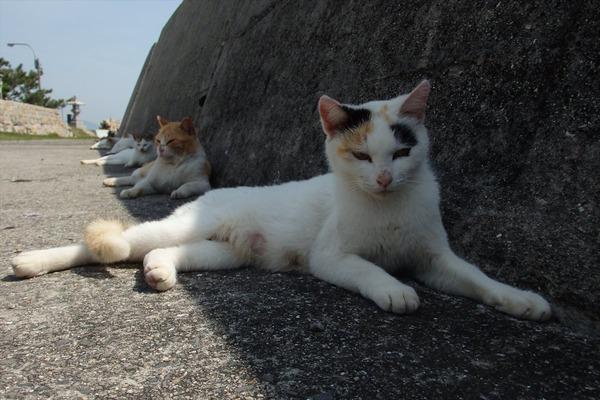 佐柳島、猫 (29)