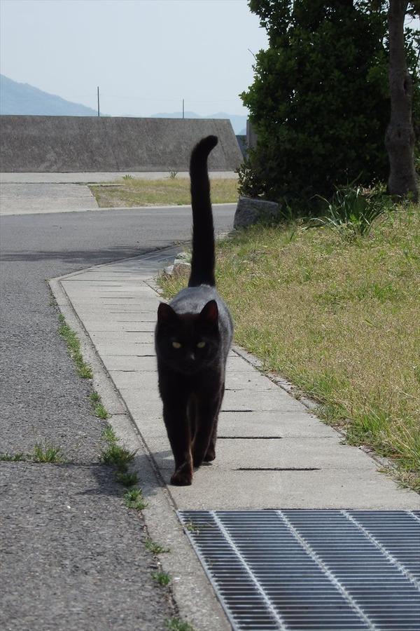 佐柳島、猫 (55)