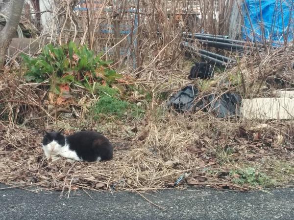 沖島、猫4