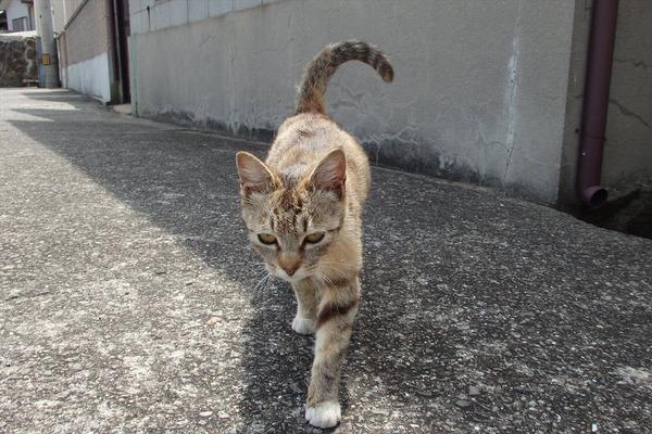 佐柳島、猫 (44)