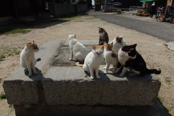 佐柳島、猫 (3)
