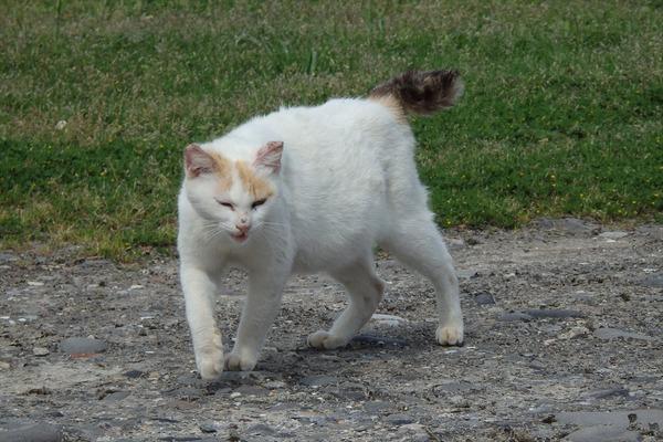 佐柳島、猫 (70)