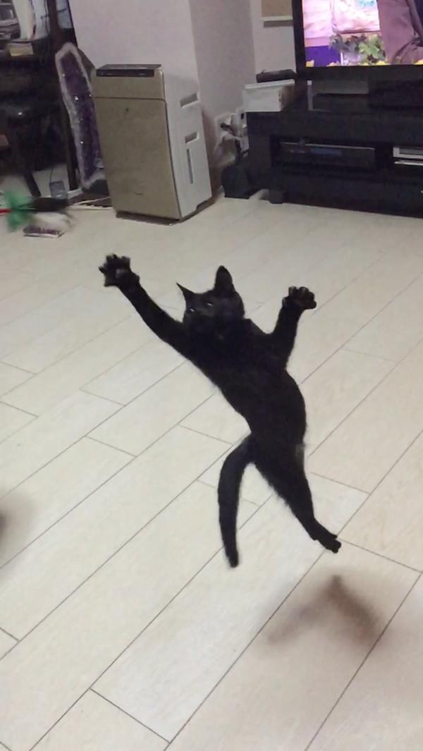 猫 (69)