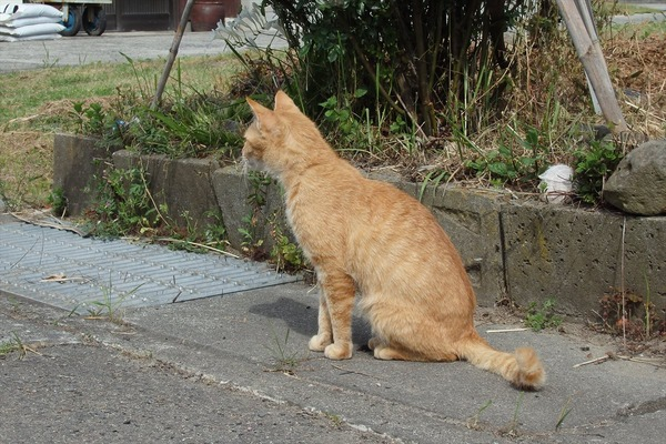佐柳島、猫 (83)
