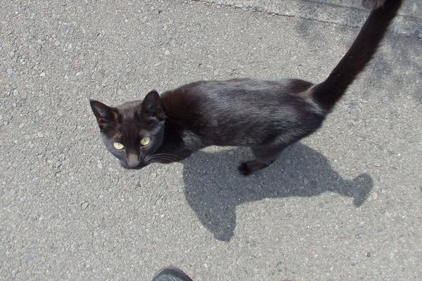 佐柳島、猫 (57)