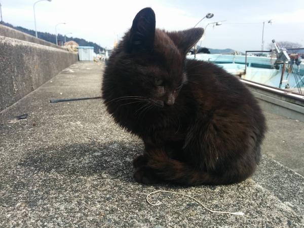沖島、猫7