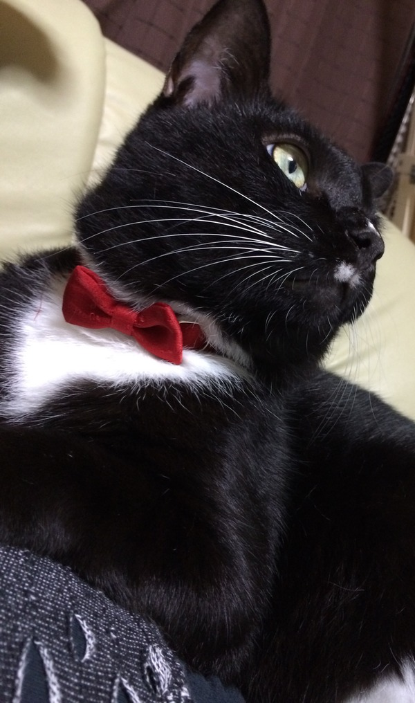 猫 (8)