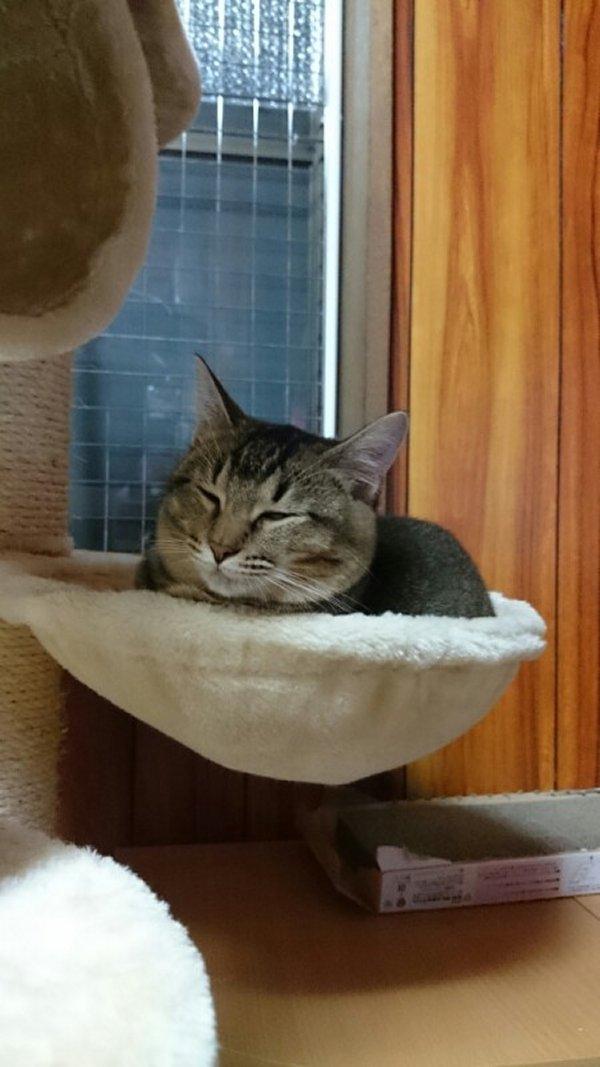 猫 (5)