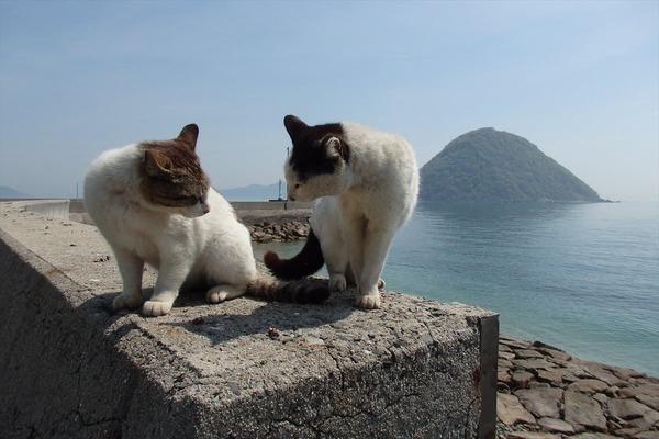 佐柳島、猫 (23)