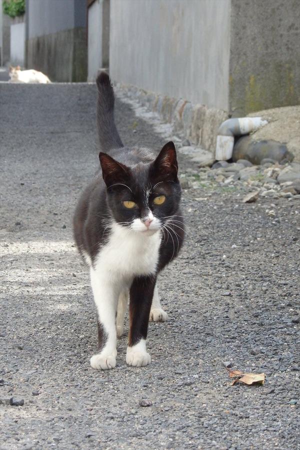佐柳島、猫 (69)