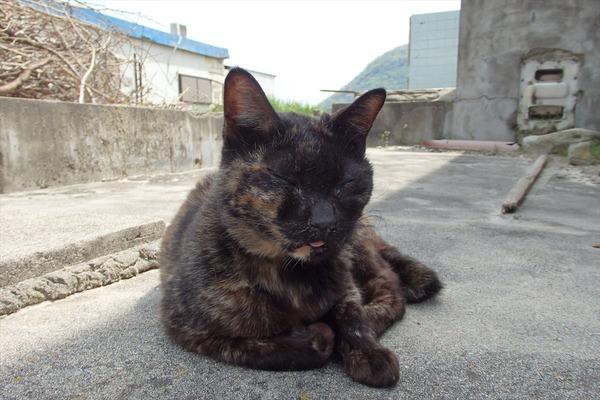 佐柳島、猫 (35)