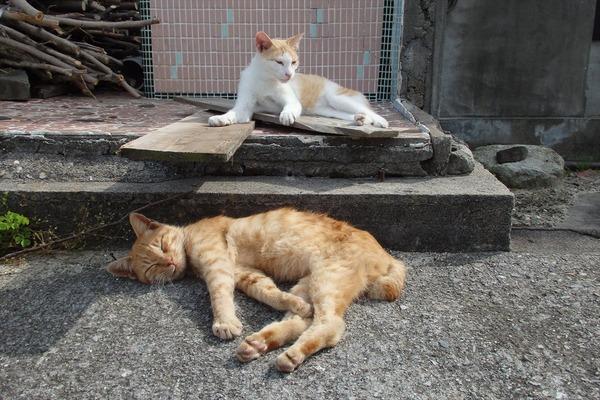 佐柳島、猫 (36)