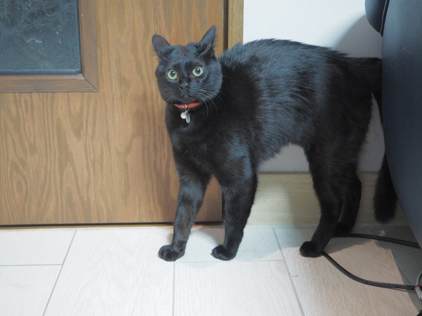 猫 (66)