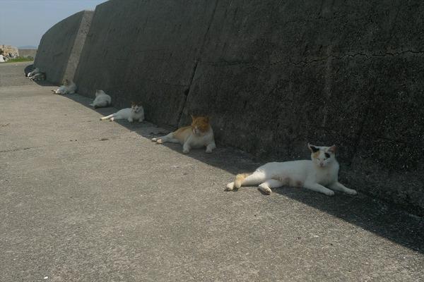 佐柳島、猫 (33)