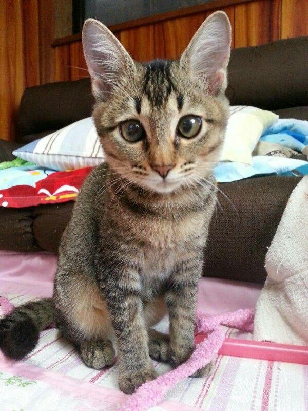 猫 (6)