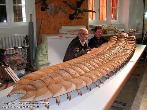 3億年前のムカデ