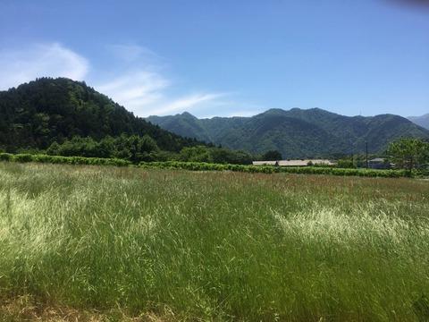 ばあちゃん家の周りの風景2