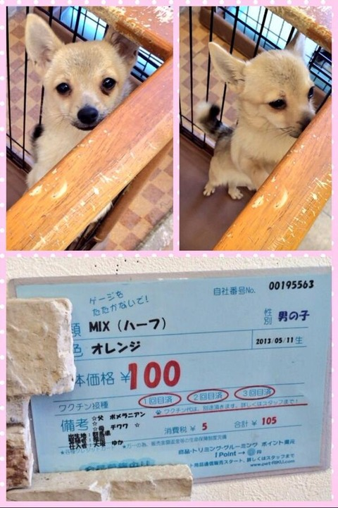犬ってペットショップで100円で売ってる