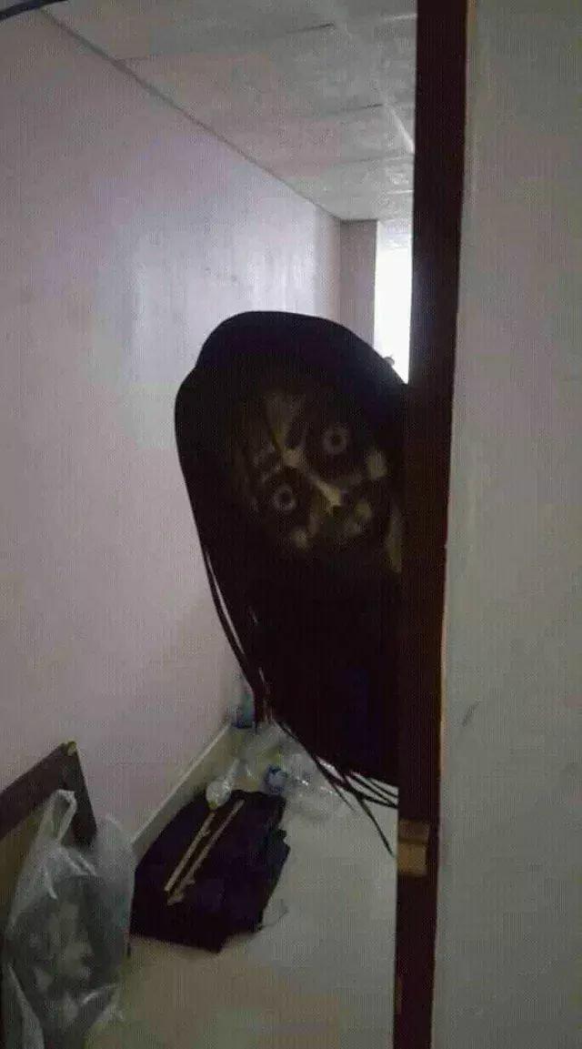 画像 めっちゃ 怖い