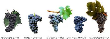 ブドウ品種