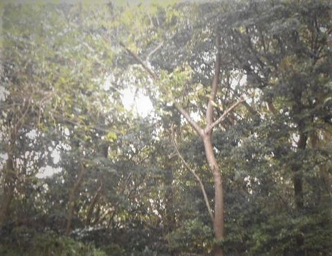 DSCN8581