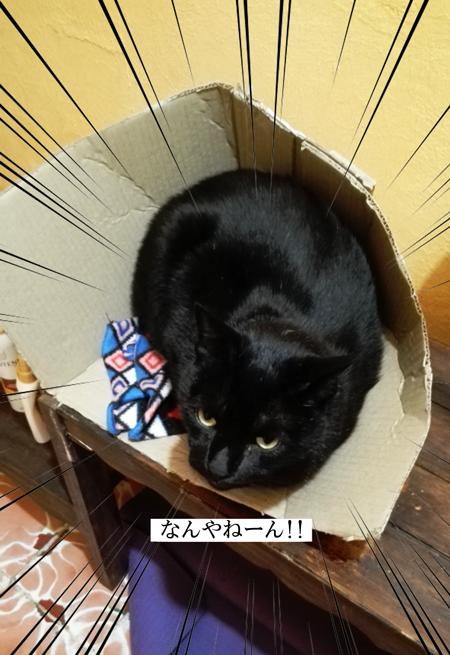 b_caja6