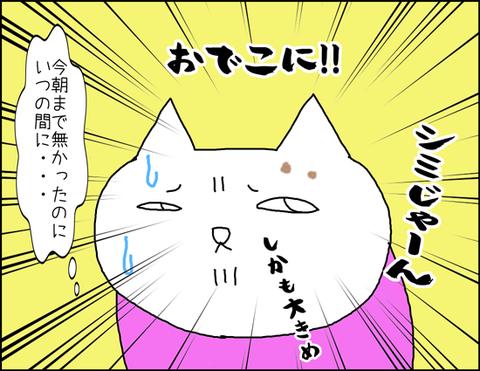 b_shimi5