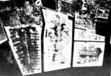 1960(昭和35)年:船橋市・完成した埋立地(50万坪)