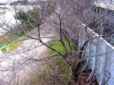 20041228-085718-船橋市若松町・船橋競馬場・さくら?-DSC03005