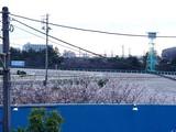 20041228-085640-船橋市若松町・船橋競馬場・さくら?-DSC03004
