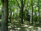 船橋市行田・行田公園-20040614-DSC02813