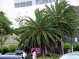 20040831-船橋市・ららぽーと・台風16号-DSC09265