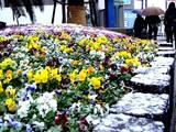 20041229-1431-船橋市浜町2・吹雪だァ-DSC03116
