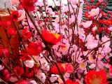 20041231-船橋市宮本2・Shop99・お正月-1138-DSC03190
