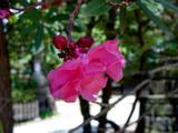 船橋大神宮・初夏の花-20040711-DSC03750