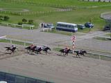 船橋競馬場第49回船橋記念レース