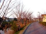 20050326-船橋市・海老川・桜まつり-1728-DSC07250