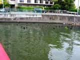 20050502-船橋市宮本3・満潮の水位-1117-DSC00007