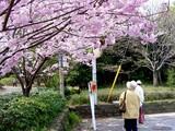 20050416-習志野市・習志野緩衝緑地・香澄公園・桜-1023-DSC08758