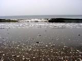 20050416-千葉市美浜区美浜・幕張海浜公園・人工海浜幕張の浜-1203-DSC09010