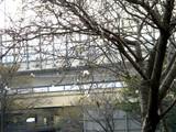 20051103-船橋競馬場・十月桜-1151-DSC04745