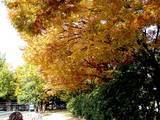 20051104-市川市・行徳駅前公園-1230-DSC04983E