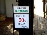 20051126-習志野市谷津バラ園-1128-DSC08636