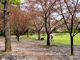 20050416-習志野市・習志野緩衝緑地・香澄公園-1008-DSC08706